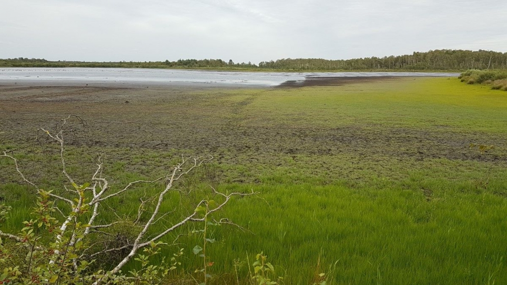 Droogte in de Groote Peel klein